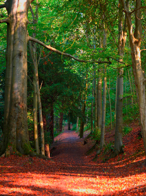 Colourful scenic image of path and surrounding trees